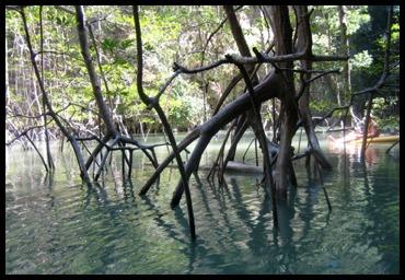 trees along the waterside