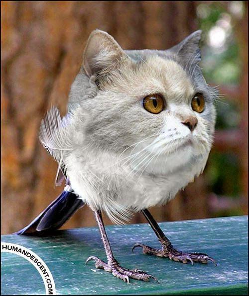 Photoshop Animal Editing So Cute ~ Creativehozz About Home ... |Hilarious Animal Edits
