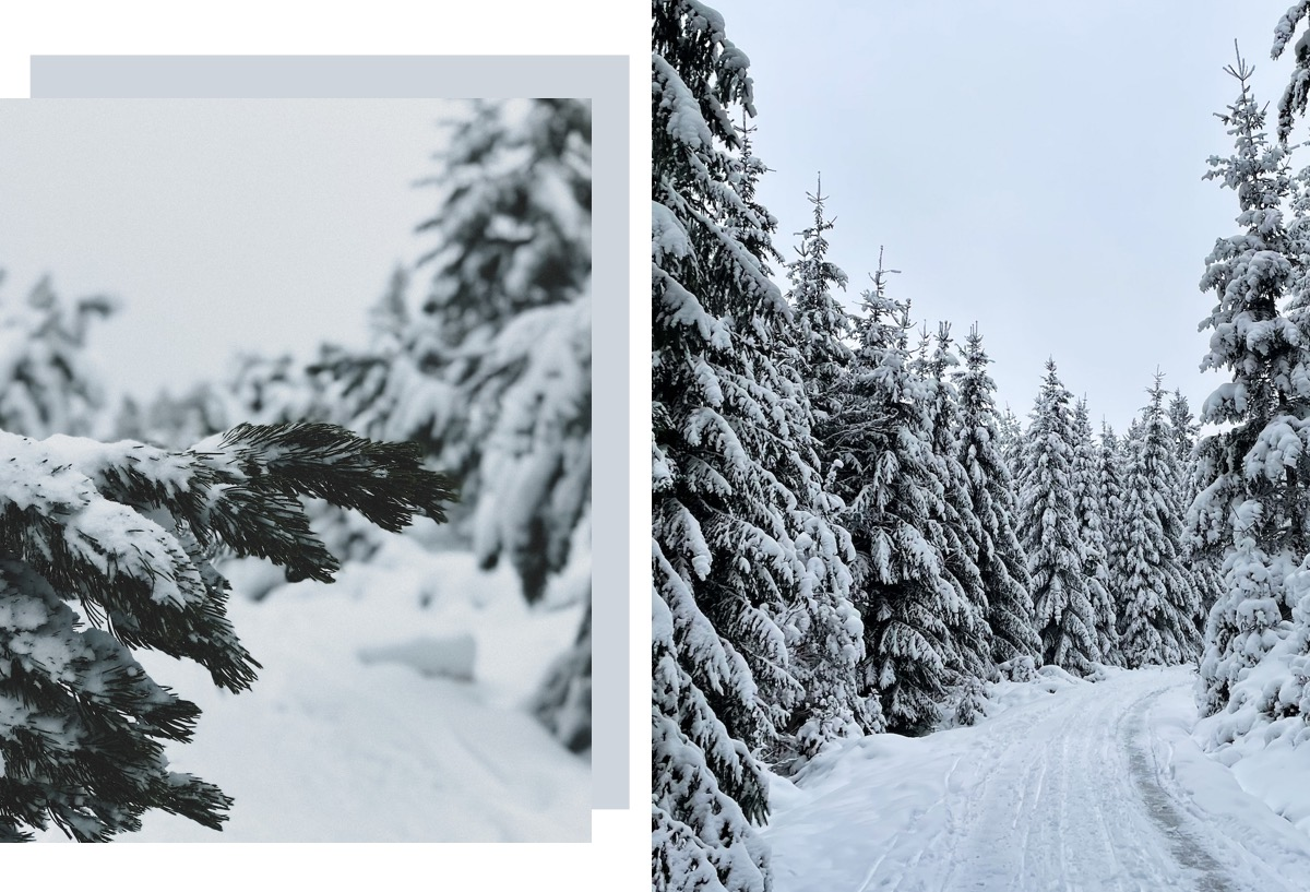 Winterwanderungen Nordschwarzwald schwäbische Alb Wandern in Baden-Württemberg Bad Wildbad Kaltenbronn Kaltenbronner Moor Sprollenhaus Loipe