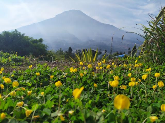 Tempat Agrowisata Sayur dan Buah