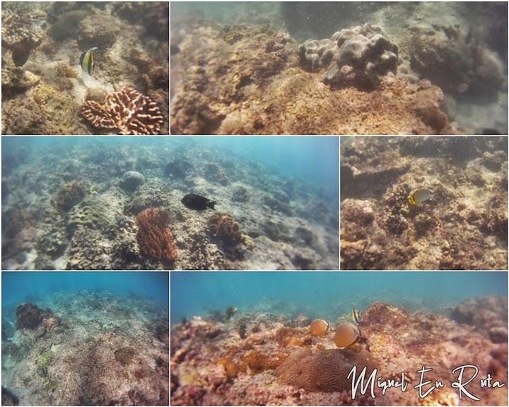 Esnórquel-Blue-Lagoon-Bali