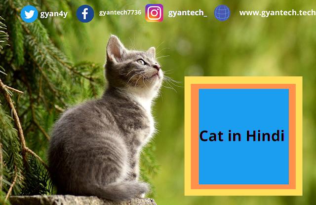 25 रोचक जानकारी बिल्लियाँ के बारे में  । Cat in Hindi