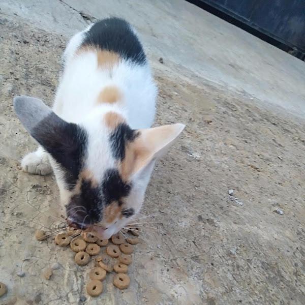 Masalah Yang Yang Ditimbulkan Oleh Kucing Liar Itu Tanggung Jawab Bersama, Bukan Hanya Tugas Pencinta Kucing!