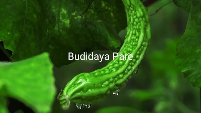 Budidaya pare