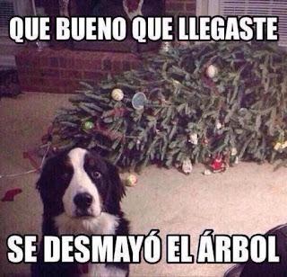 perro disimula y dice que árbol navidad sufre desmayo