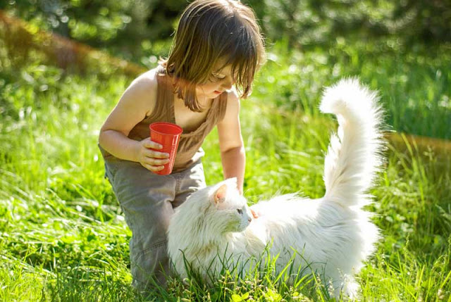 A young child pets a cat outside in summer