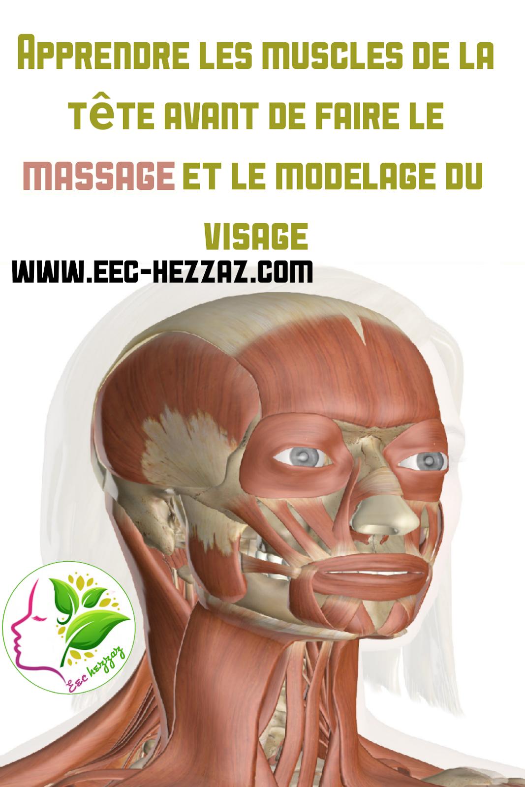 Apprendre les muscles de la tête avant de faire le massage et le modelage du visage