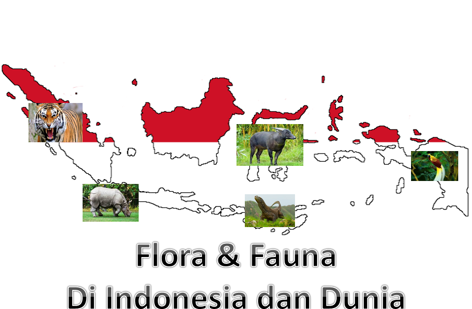 Di indonesia, ada berbagai jenis makhluk hidup, di darat, di air maupun di udara. Materi Geografi Kelas Xi Bab Ii Flora Fauna Di Indonesia Dan Dunia Info Publik News