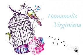 Hamamelis Virginiana