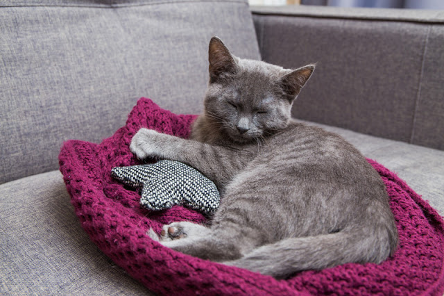 Eight ways to help your cat go to the vet without stress. Take your cat's bedding with you. Photo shows cat relaxing in a cat bed