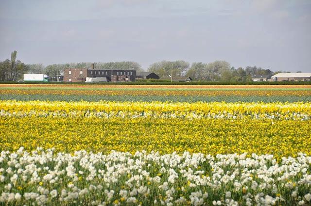 Lugares para conhecer na Holanda_Keukenhof