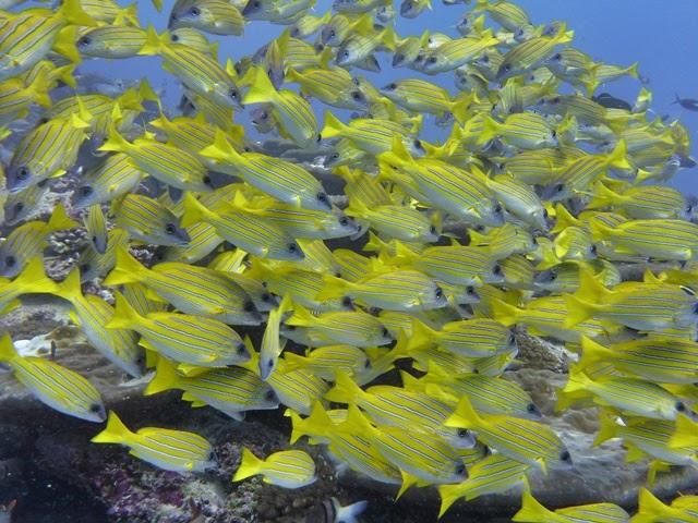 Submarinismo en Maldivas