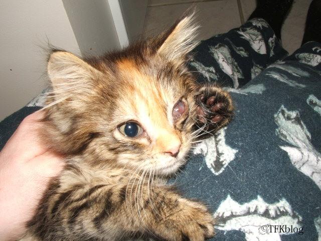 Fleurp as a kitten