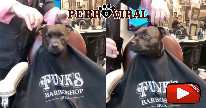 Perro fue atendido en una barbería y logró volverse viral