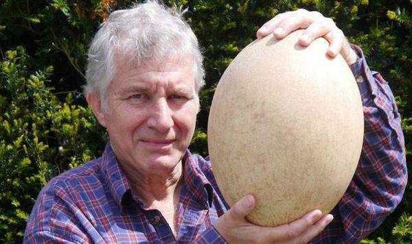 Wow, Telur Ayam Terbesar di Dunia Beratnya Mencapai 163 Gram