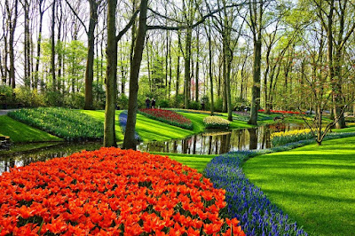 giardino-fiori-alberi sempreverdi