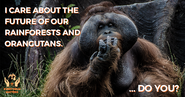 3 Reasons Why #EveryPalmMatters and We Need Sustainable Palm Oil