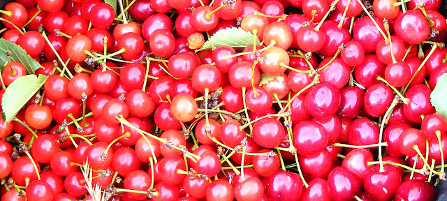 Sour cherries (left) and sweet cherries (right). Photo by Loire Valley Time Travel.