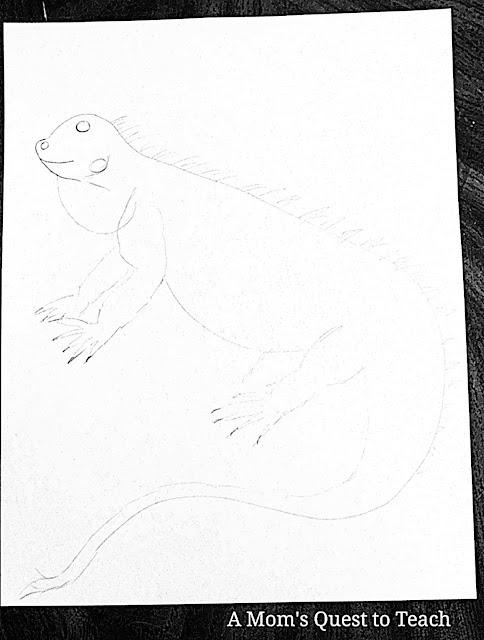 pencil drawing of iguana