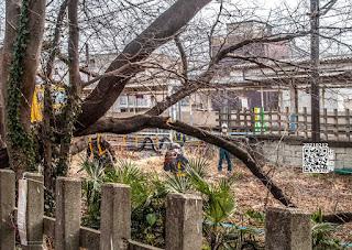 チェーンソウで枝を切ってる写真です。「パシャ」。