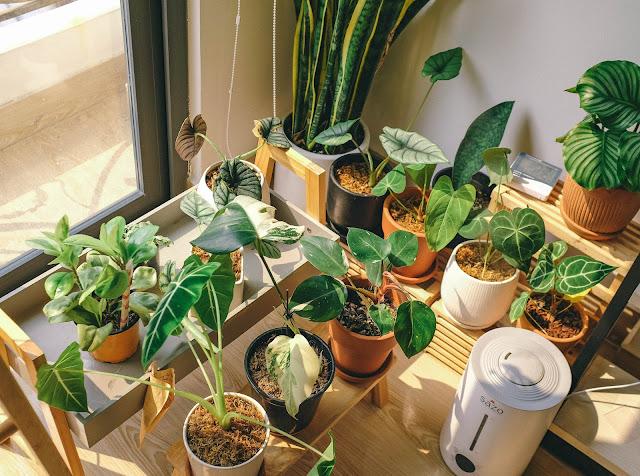 Jenis dan Cara Menata Tanaman Hias untuk Halaman Rumah Minimalis