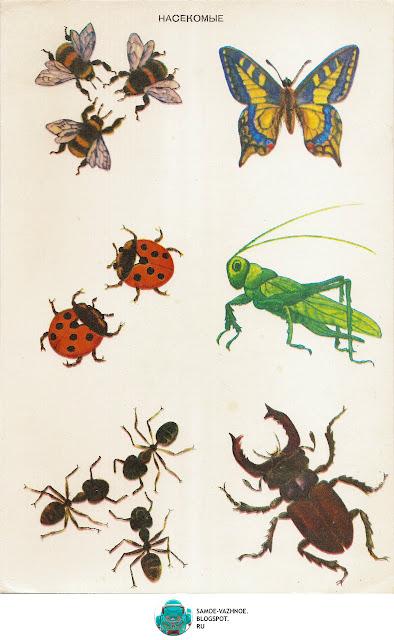 Лото для детей скачать бесплатно СССР советское. В лесу игра СССР 1986 год. Игра насекомые СССР В лесу. Карточки насекомые.