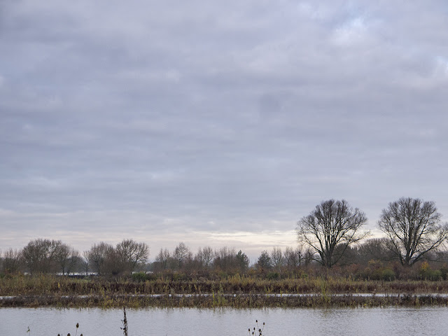 More Views over the Floodplain Forest Nature Reserve