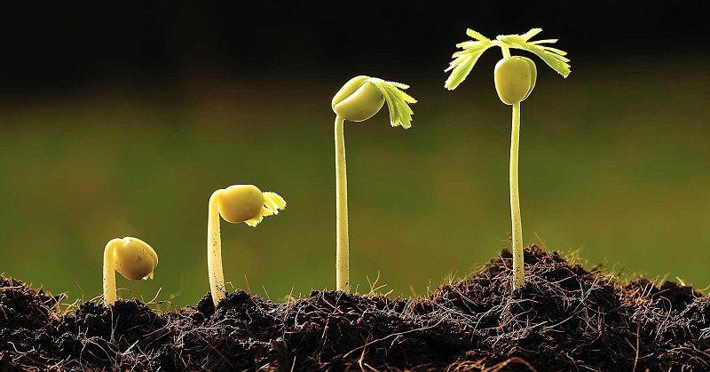 As Fases da Maturidade Espiritual do Médium Umbandista