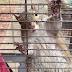 ΥΠΟ ΤΗΝ ΕΠΗΡΕΙΑ ΝΑΡΚΩΤΙΚΩΝ σκίουρος; Η έρευνα της αστυνομίας και ο άνδρας που καταζητείται