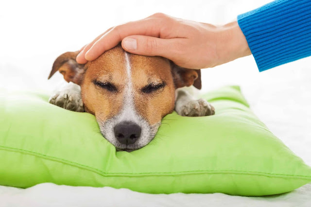 Why Is My Dog Breathing Weird? Causes & Solutions