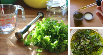 Find Out Why Oregano is The Most Powerful Herb, You Should Never Miss More In Your Diet