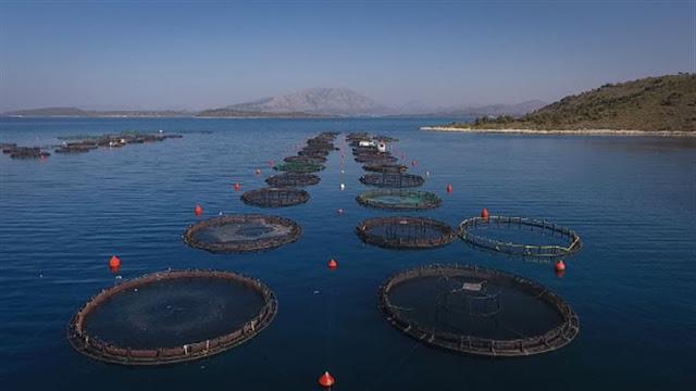 Το Πράσινο Κίνημα κατά της δημιουργίας βιομηχανικής Περιοχής Οργανωμένης Ανάπτυξης Υδατοκαλλιεργειών στον Πόρο
