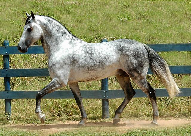Arabian Pets