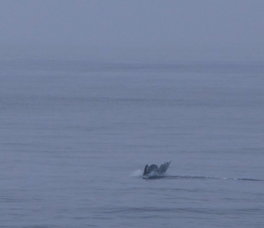 Flagship Whale Watching Excursions by Stacey Kuhns