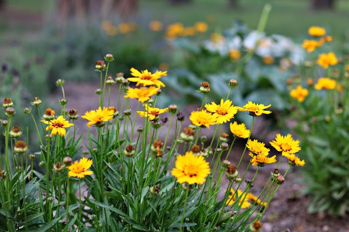 Sunnydell Flower Farm/Introduction