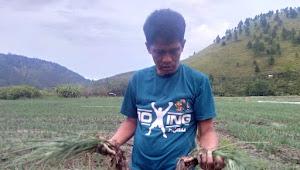 Banjir Lagi di Sianjurmula, Ladang Petani Jadi Korban