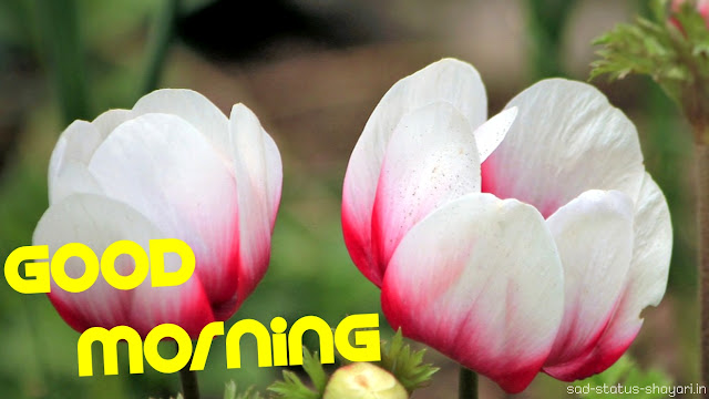 best good morning images flowers