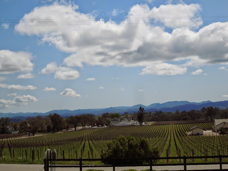 Summerwood Vineyard View from Live Oak Drive, © B. Radisavljevic