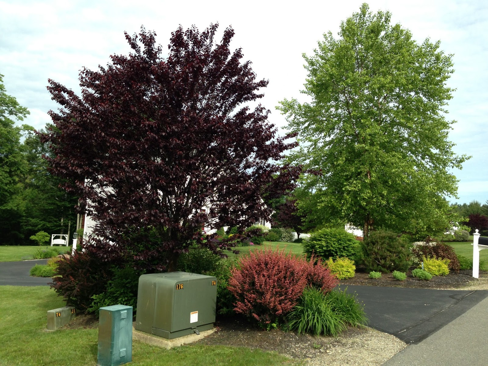 Front Yard Landscaping Ideas Yard Ideas