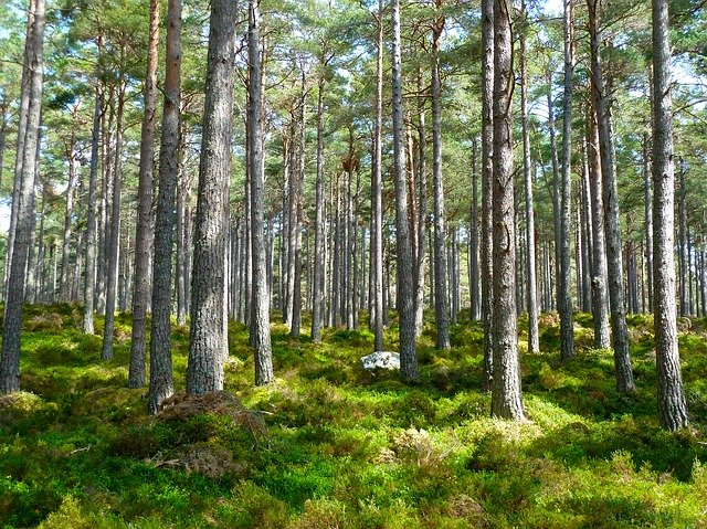 Fundamental Concept of Forest Ecology