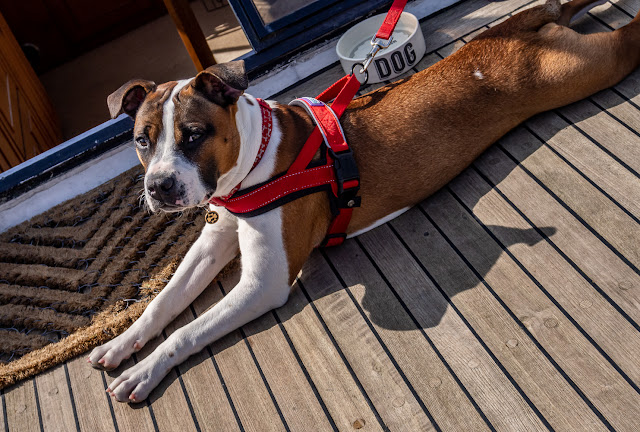 Photo of Ruby sunbathing on the aft deck