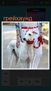 собаку породы грейхаунд на поводке держит женщина 667 слов 12 уровень