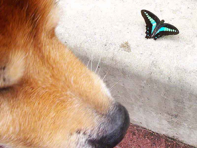 dog,butterfly