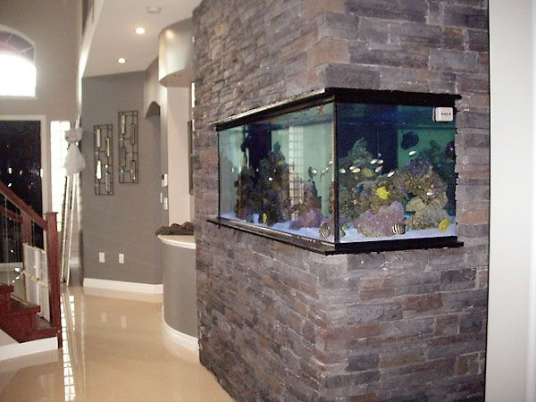 46 Desain Aquarium Cantik Dan Unik Anti Mainstream Rumahku Unik
