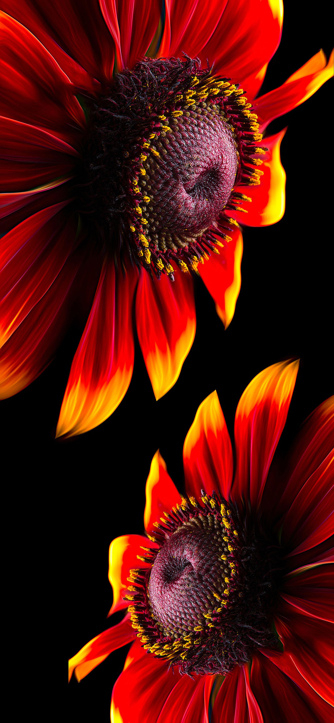Red-Petaled-Flower-iphone-style-wallpaper
