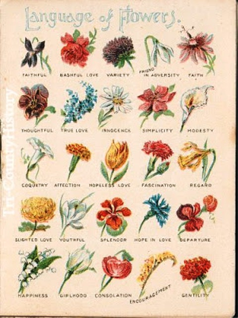 Pictures Of Flowers Names And Meanings
