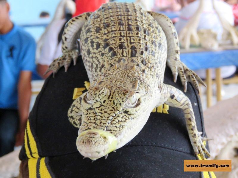 Meet 155 years old crocodiles @ Teluk Sengat Crocodile Farm
