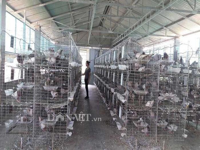 Xây lầu nuôi chim, mỗi tháng bỏ túi hơn 25 triệu đồng