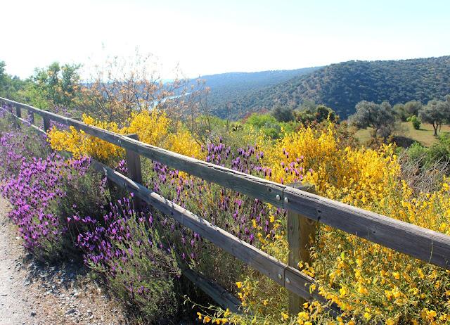 Flores amarillas y violetas