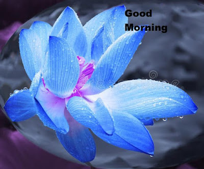 Good morning blue lotus flower images free download